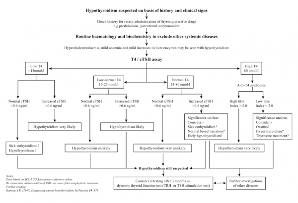Canine Hypothyroism Flowchart